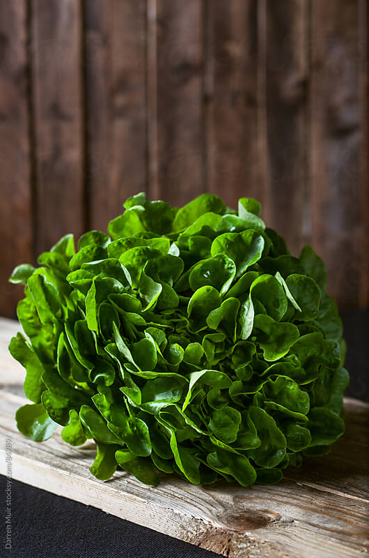 Organic lettuce  by Darren Muir for Stocksy United