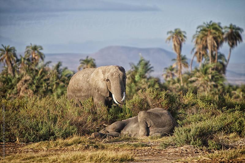 Elephant Down by aaronbelford inc for Stocksy United