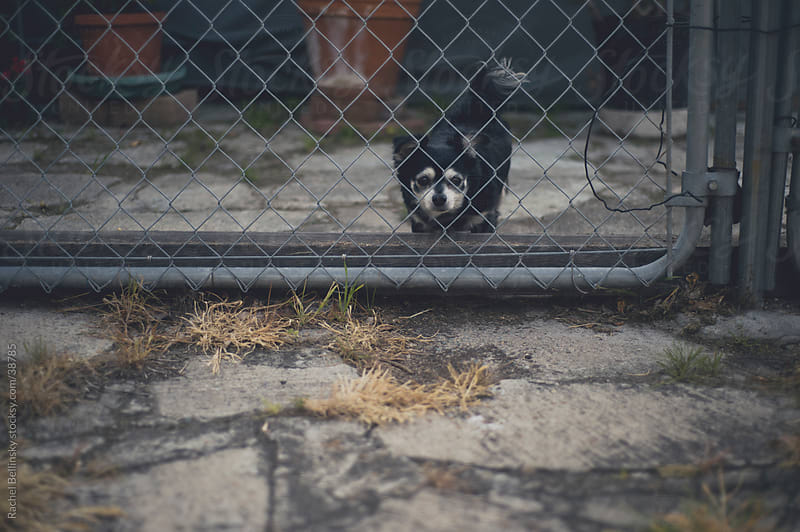 Small lonesome dog behind fence by Rachel Bellinsky for Stocksy United