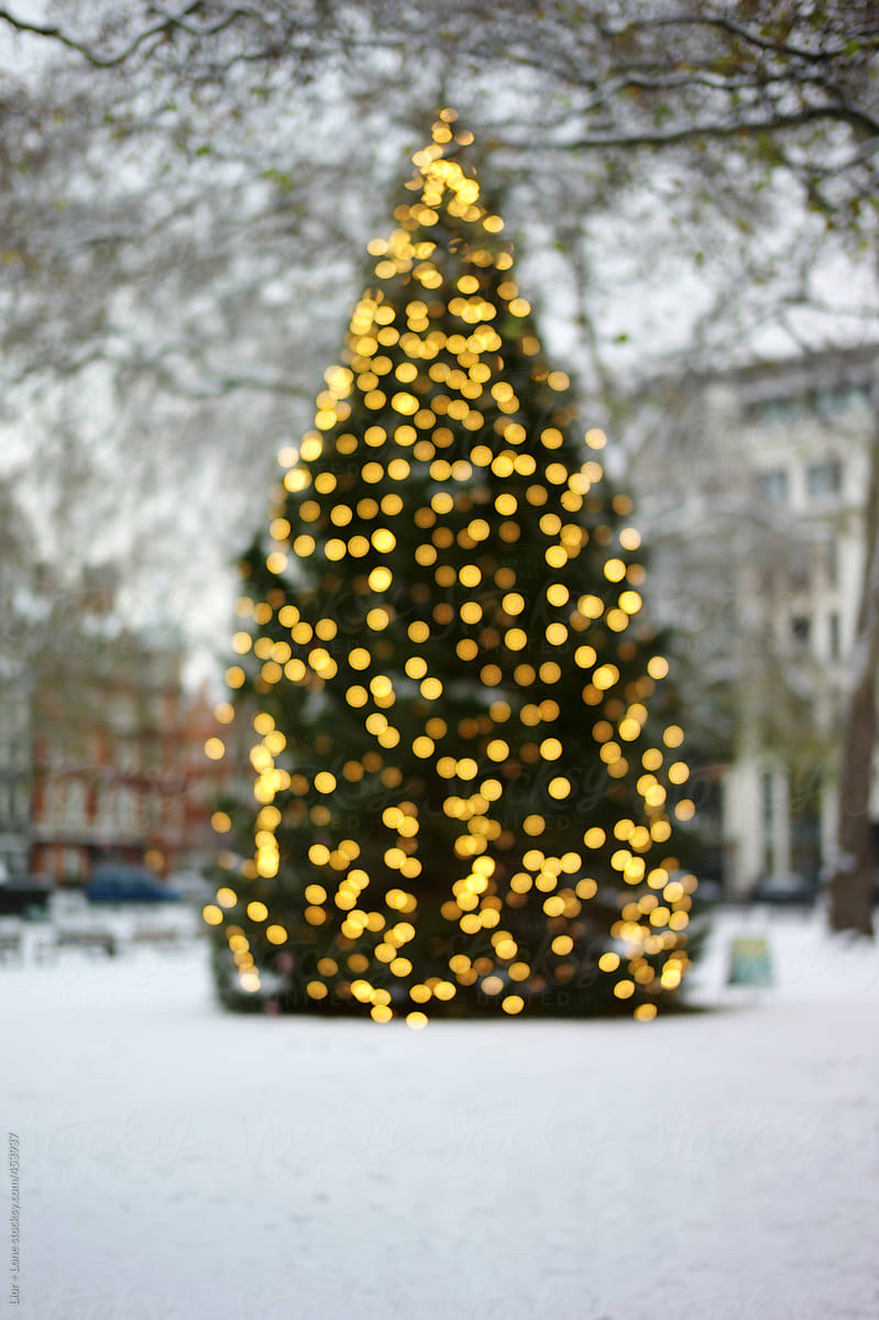 huge blurry christmas tree with lights outdoor by lior lone for stocksy united