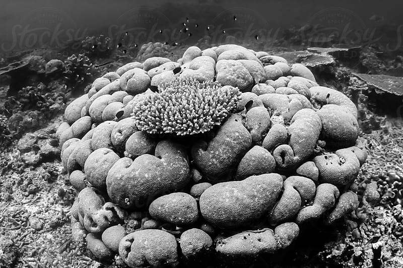 Hard coral formation on the reef underwater in Malaysia by Soren Egeberg for Stocksy United