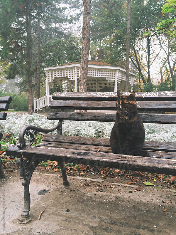 Cat sitting on a bench in the empty city park on a cold fogy  morning by Jovana Milanko for Stocksy United