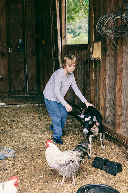 A boy chasing a goat in a barn by Stephen Morris for Stocksy United