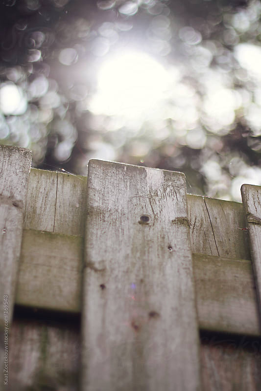 A wooden garden fence underneath sunlit trees, shot from an upward angle.  by Kaat Zoetekouw for Stocksy United