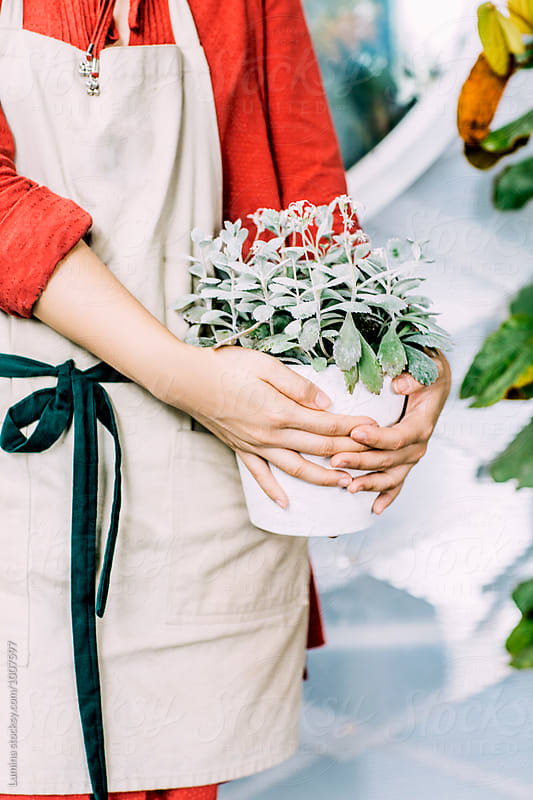 Florist Holding potted flowers.