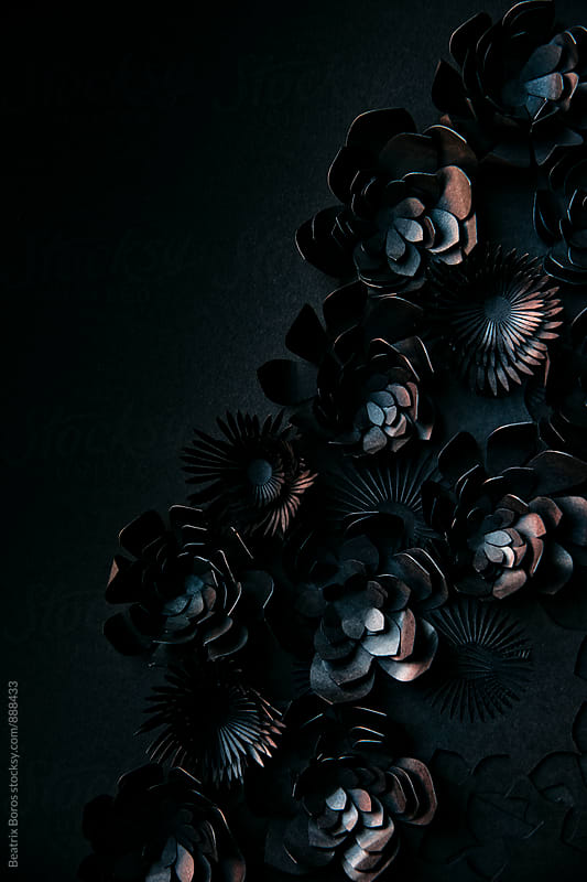 Black flowers on black baclground by Beatrix Boros for Stocksy United