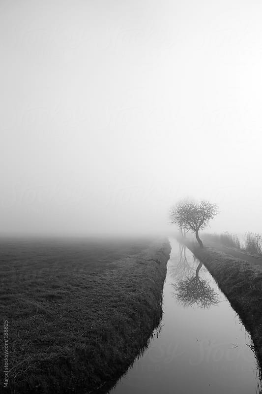 Foggy morning landscape by Marcel for Stocksy United