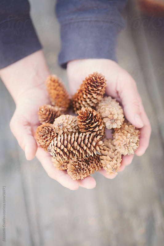 Man holding some fir cones he has collected in Denmark by Elisabeth Coelfen for Stocksy United