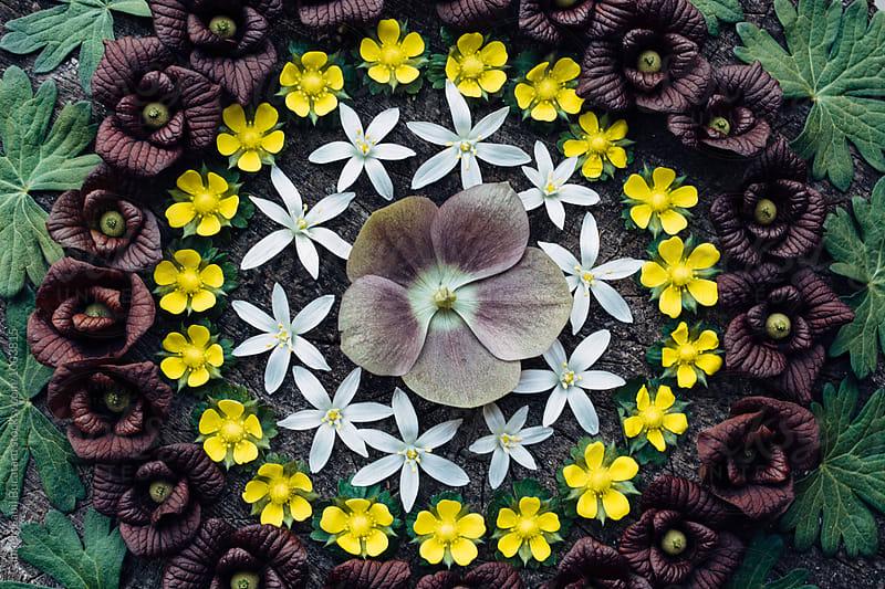 Circular pattern of wild flowers by Gabriel (Gabi) Bucataru for Stocksy United