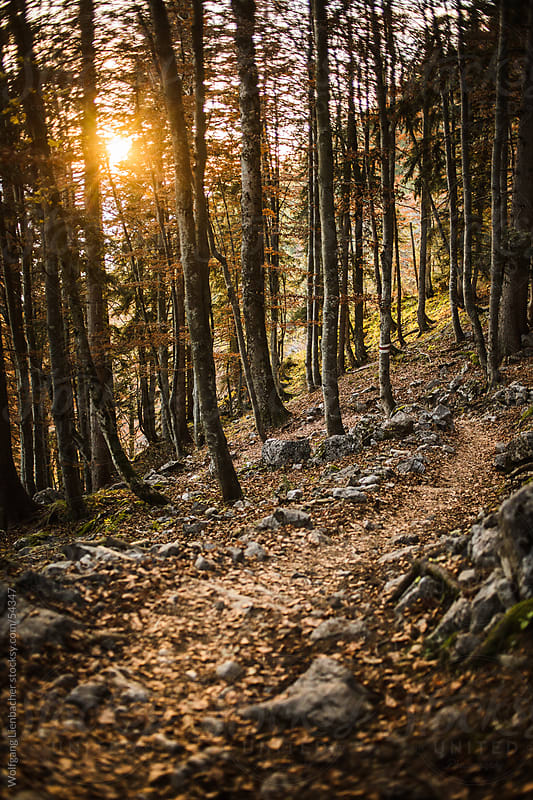 hiking in fall, mountain trail in a forest in Austria by Wolfgang Lienbacher for Stocksy United