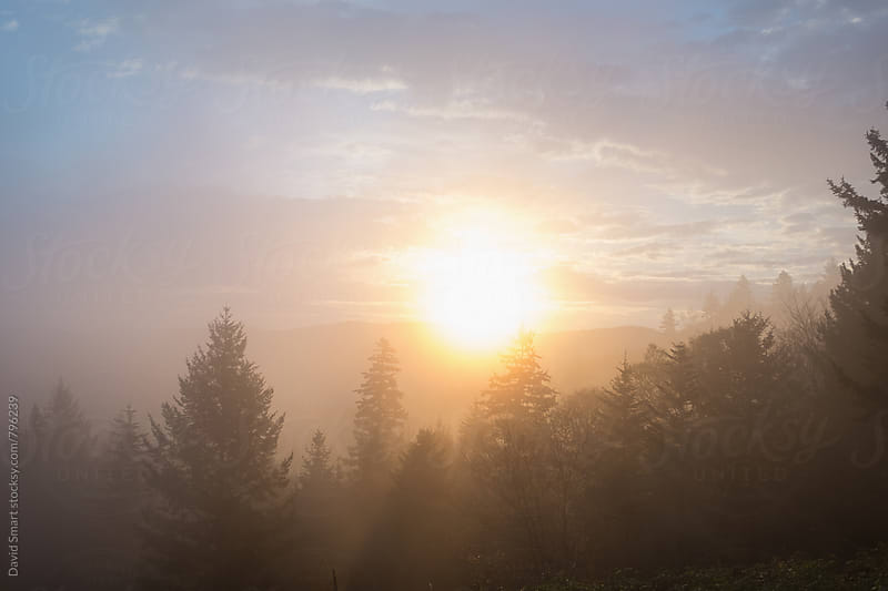 Sun shining through fog shrouded trees by David Smart for Stocksy United