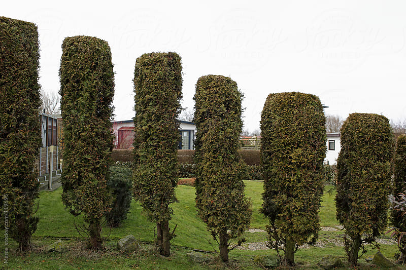 Artistic conifer hedge by Marcel for Stocksy United