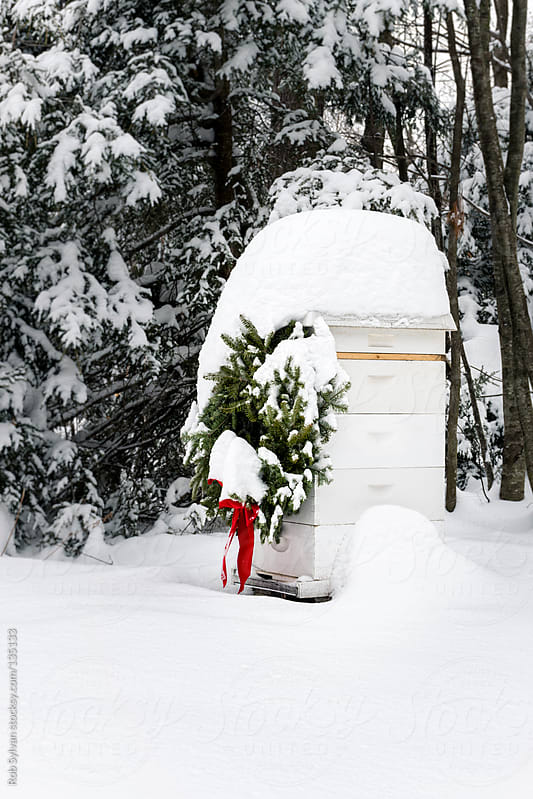 Christmas Beehive by Rob Sylvan for Stocksy United