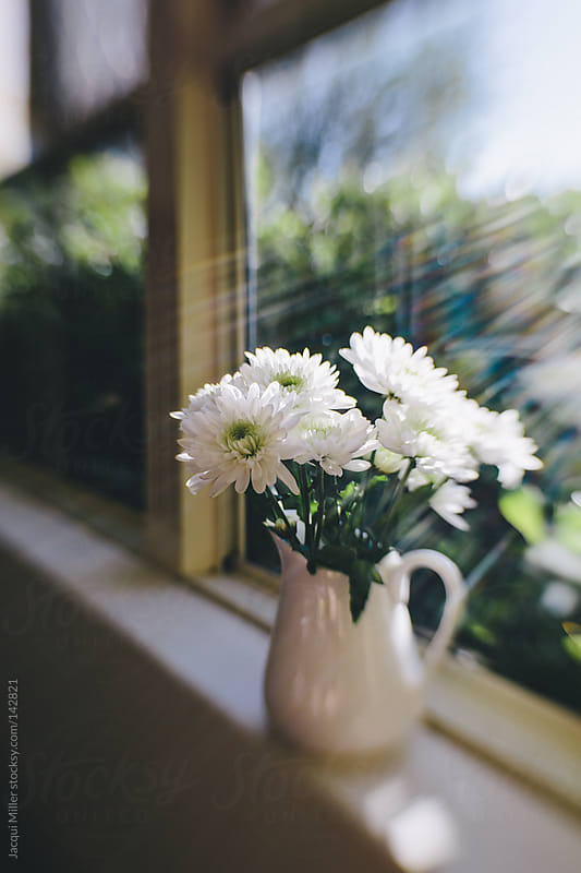 White flowers in natural sunlight by Jacqui Miller for Stocksy United