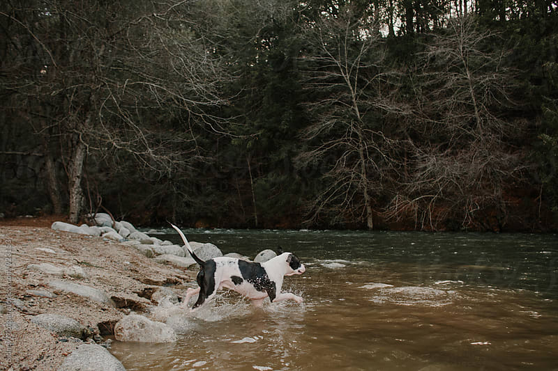 Dog Running into Water by Sidney Morgan for Stocksy United