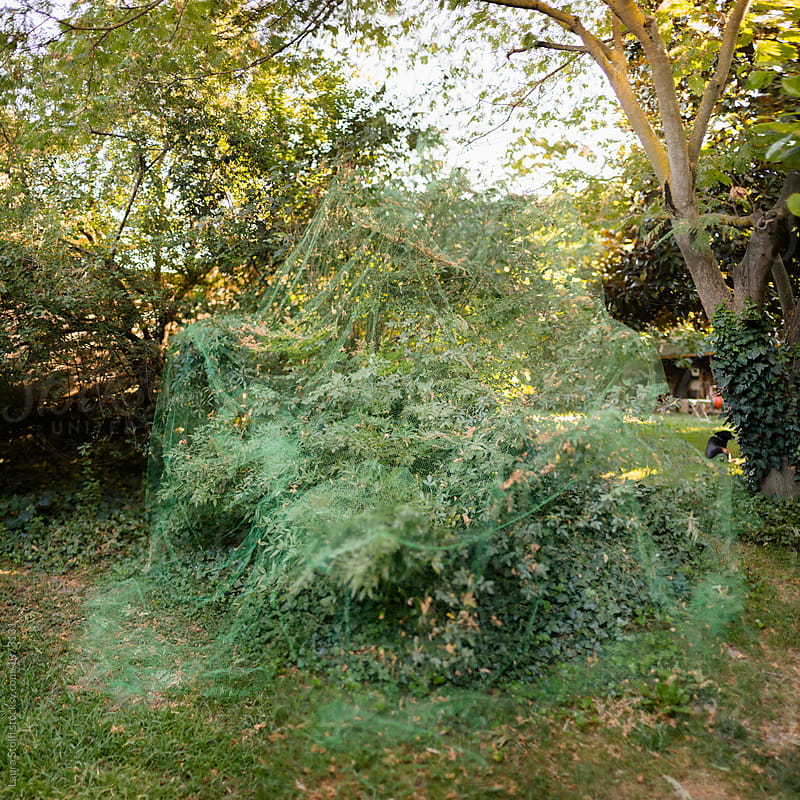 Net over garden shrubs in order to protect the plants from pest by Laura Stolfi for Stocksy United