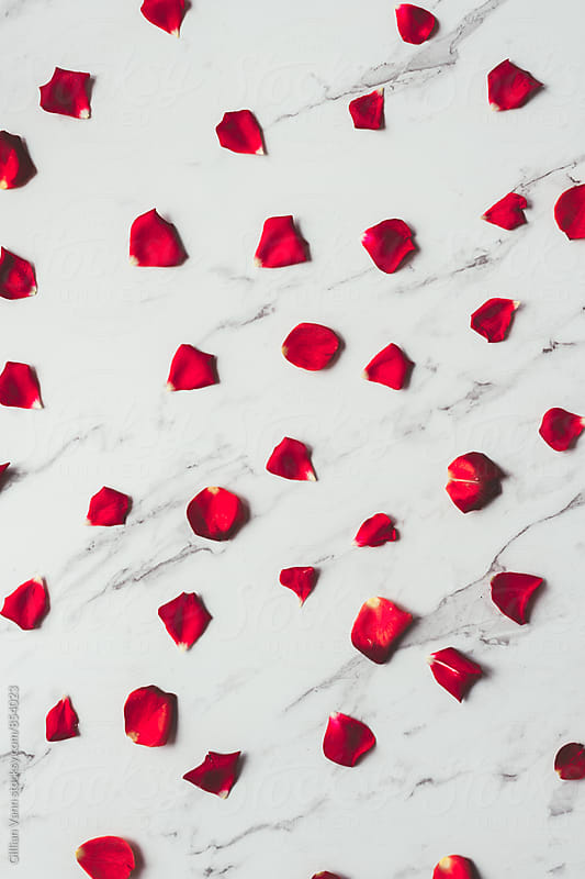 red rose petals on a marble background by Gillian Vann for Stocksy United