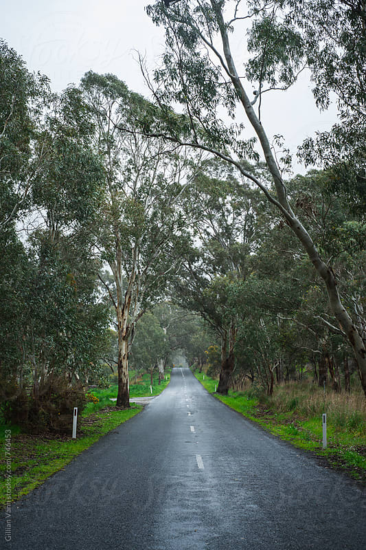 wet, empty road in rural Australia by Gillian Vann for Stocksy United