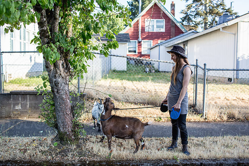Goats eating a plant on the sidewalk by michela ravasio for Stocksy United