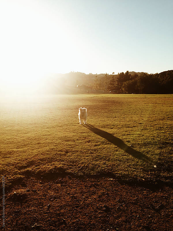 Small Dog in Park at Sunset by Jayme Burrows for Stocksy United