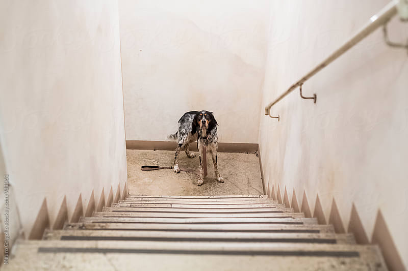 Dog waiting to go out by Mauro Grigollo for Stocksy United