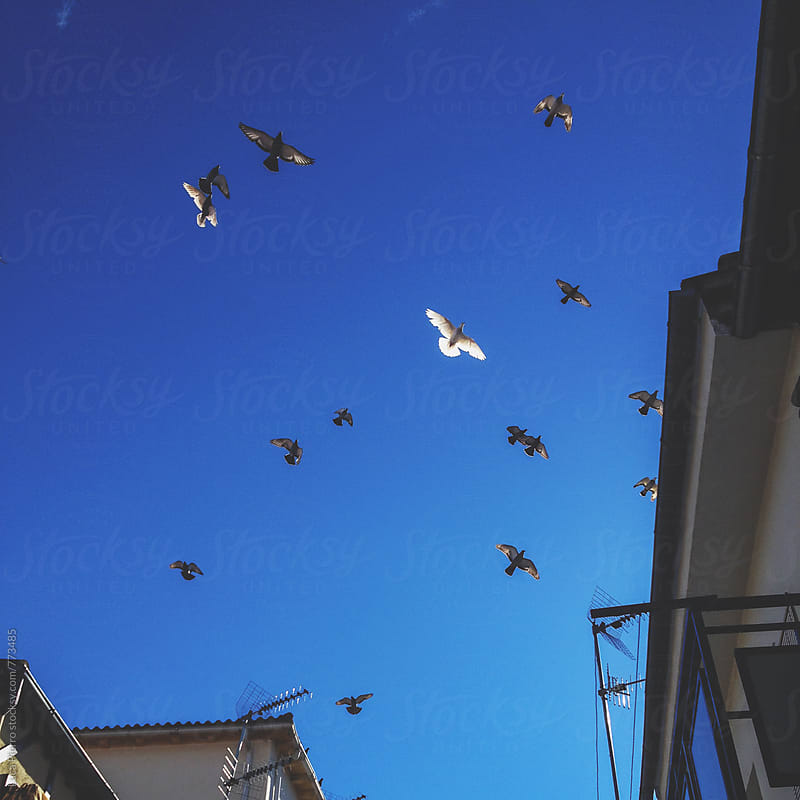 Birds flying in the sky by Luca Pierro for Stocksy United