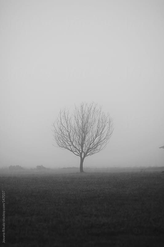 Single tree in a fog by Jovana Rikalo for Stocksy United