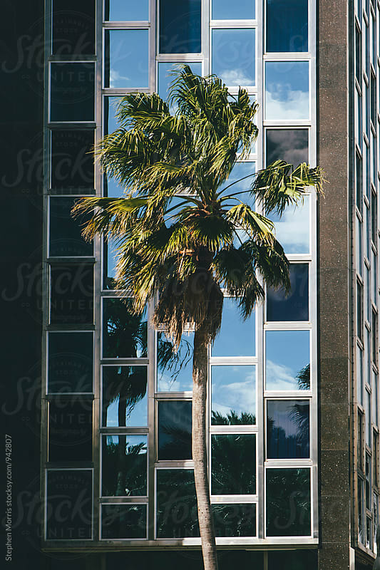 Palm Tree in front of building by Stephen Morris for Stocksy United