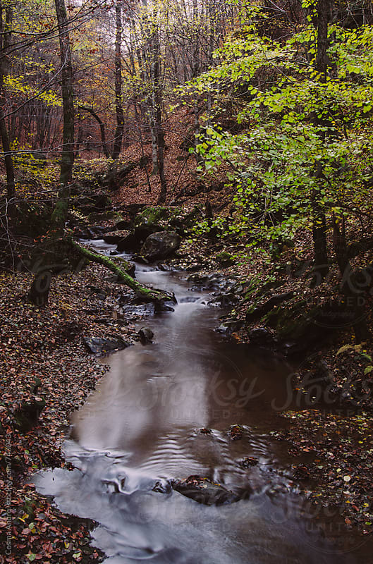 Mountain river flowing trough autumn forest by Cosma Andrei for Stocksy United