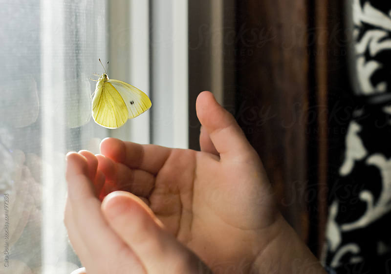 the hands of a child reach out to touch a yellow butterfly resting on a window by Cara Dolan for Stocksy United