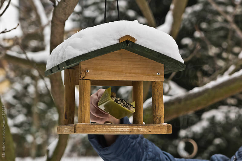 Person placing food in bird house by Melanie Kintz for Stocksy United
