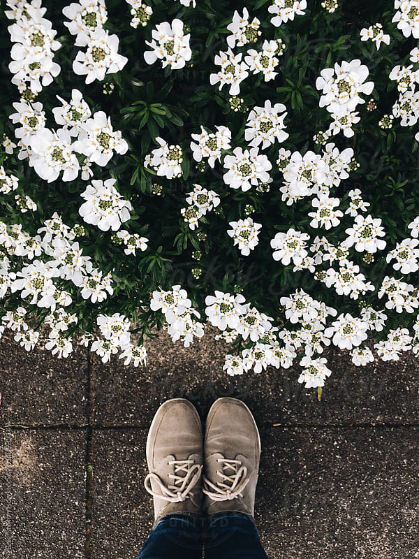 White Daisy Flowers and Two Feet in Grey Tennis Shoes by Briana Morrison for Stocksy United