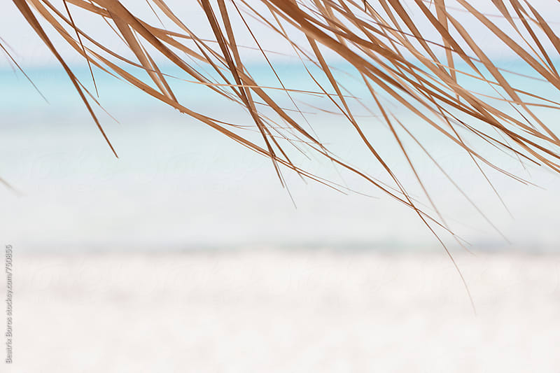 Minimalist photo of dry palm leaves moving by the wind with blurry blue sea in the background by Beatrix Boros for Stocksy United