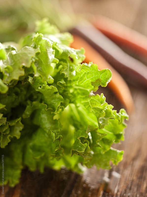 Fresh Lettuce by Daniel Hurst for Stocksy United
