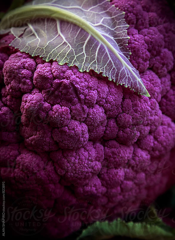 purple cauliflower by ALAN SHAPIRO for Stocksy United