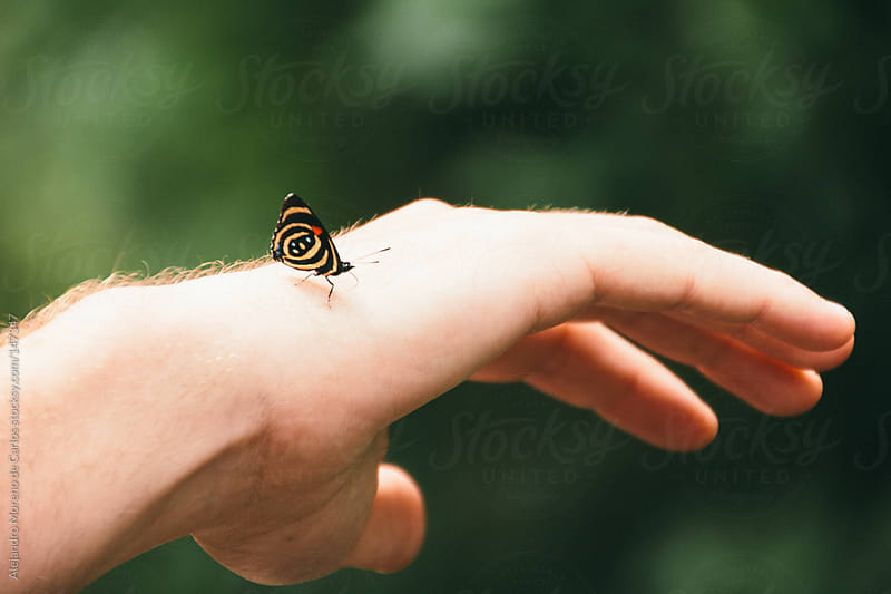 Butterfly on human hand close up with green background by Alejandro Moreno de Carlos for Stocksy United