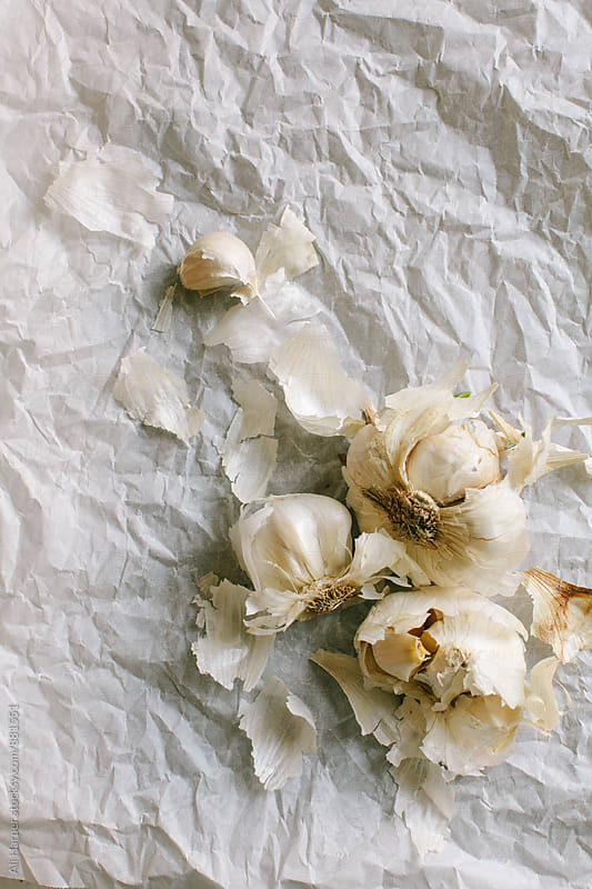 Head of garlic by Ali Harper for Stocksy United