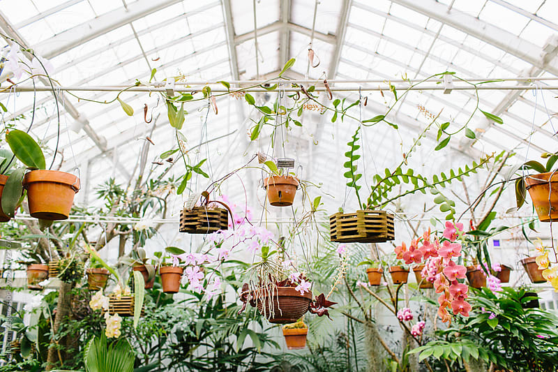 tropical plants in conservatory by Cameron Zegers for Stocksy United