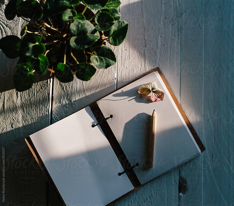A plant and notebook on a sunny table. Focus is on the notebook. by Helen Rushbrook for Stocksy United