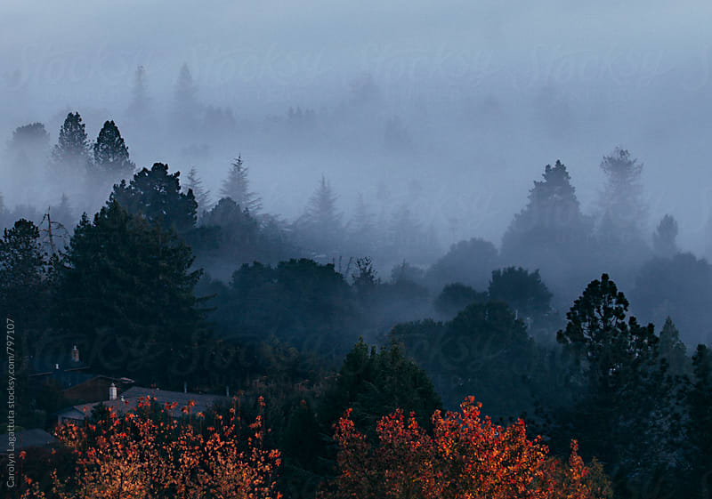 Foggy morning in the suburbs by Carolyn Lagattuta for Stocksy United