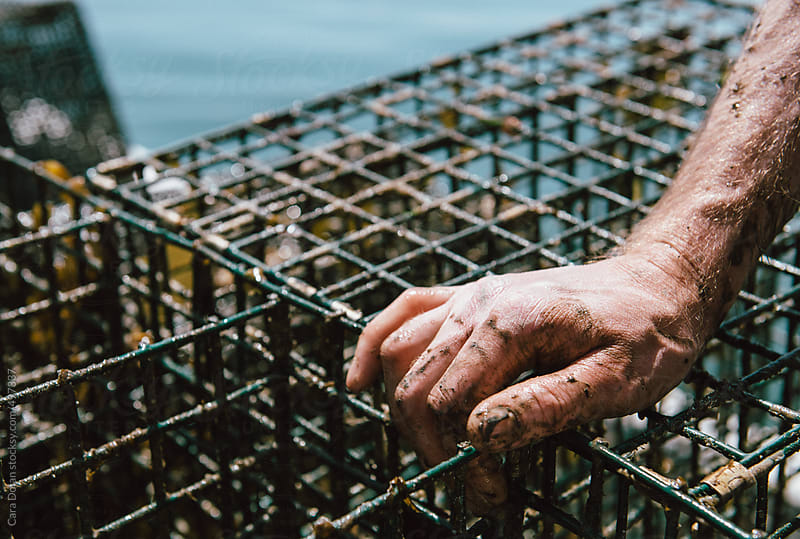 Oyster farmer's muddy hands after lifting traps up from the river floor by Cara Dolan for Stocksy United