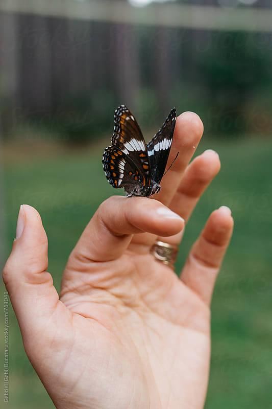 Female's finger with a butterfly on it by Gabriel (Gabi) Bucataru for Stocksy United