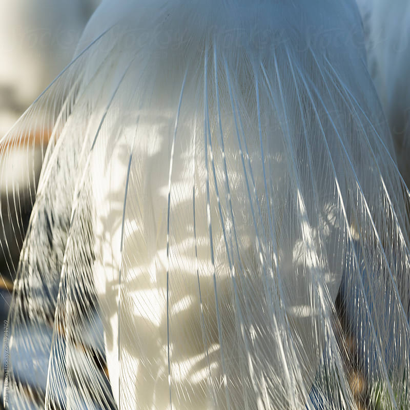 Close-up of Great Egret feathers by Adam Nixon for Stocksy United