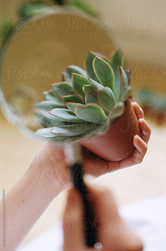 Succulent through magnifying glass by Lyuba Burakova for Stocksy United