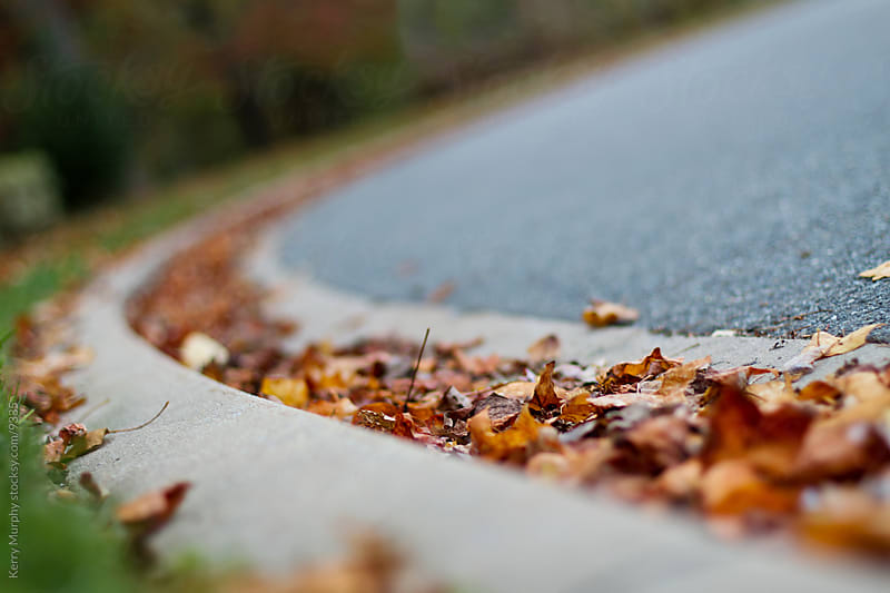 Leaves collected on a roadside curb by Kerry Murphy for Stocksy United