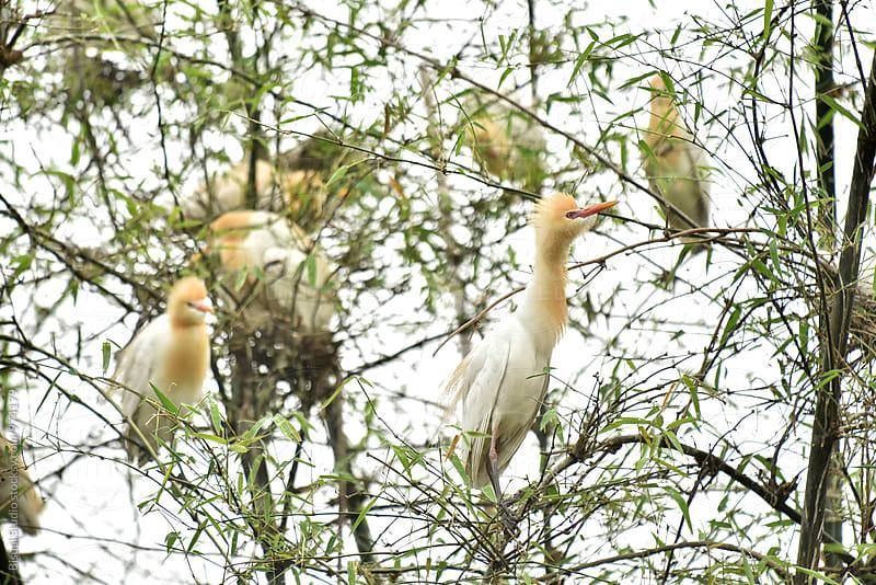 Wild birds in Phewa Lake, Pokhara by Bisual Studio for Stocksy United