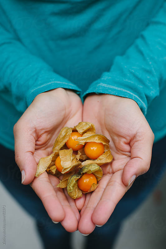 Handful of physalis by Zocky for Stocksy United