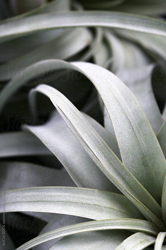 Close Up Of A Large Airplant by ALICIA BOCK for Stocksy United