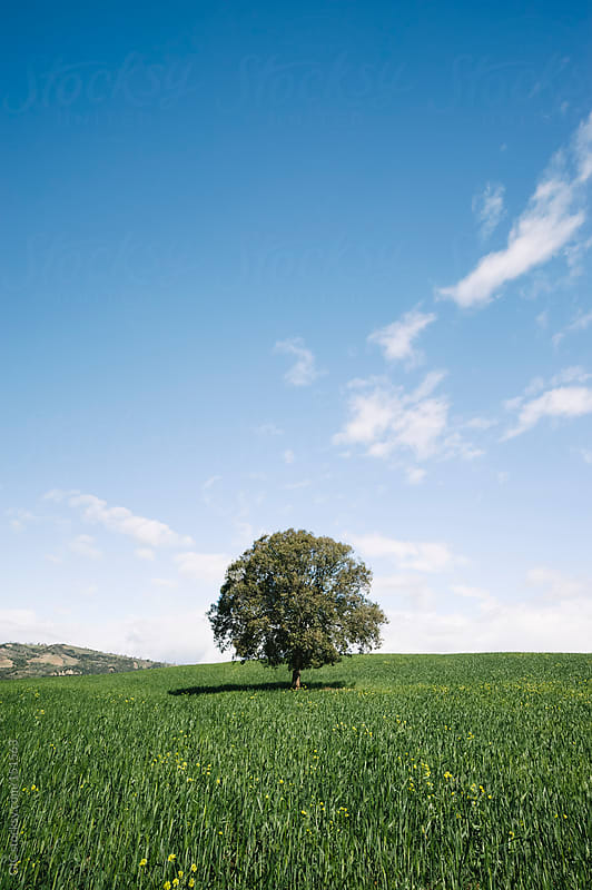 Tree in a green field by GIC for Stocksy United