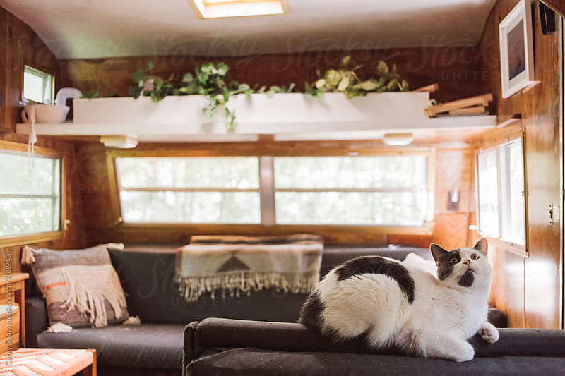 Cat sitting in camper trailer by Carey Shaw for Stocksy United